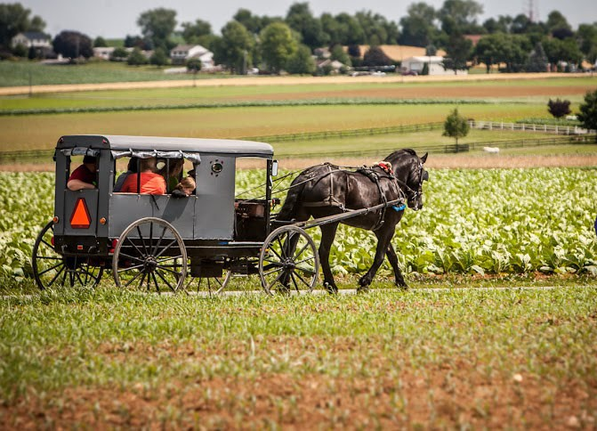 Amish Paradise Trail Buggy Ride