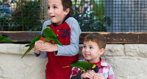 Daily Events - Lorikeet Feeding