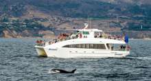 Harbor Breeze Cruises