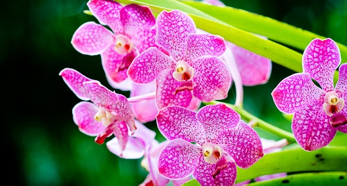 Orchid Care - Diagnosing Pests & Diseases