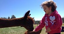 Meadowrock Alpaca Farm