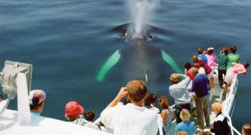 Hyannis Whale Watcher Cruises