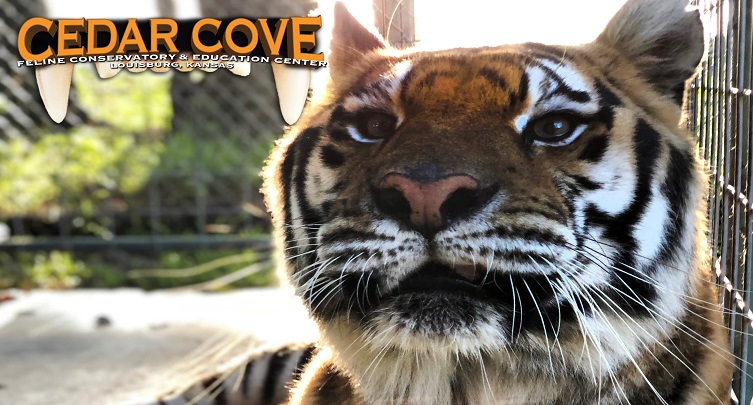 Cedar Cove Feline Conservatory and Education Center