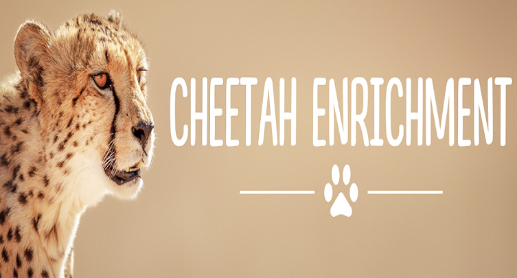 Cheetah Enrichment