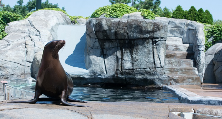 First Bank Sea Lion Show
