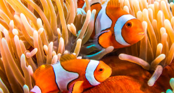 Great Barrier Reef - IMAX Film