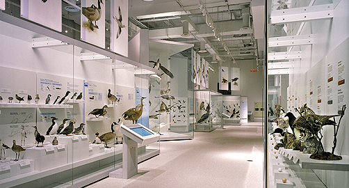 canadian museum of nature web analysis essay The smithsonian center for education and museum this essential digital resource from the early days of the world wide web provided the museum field with a.